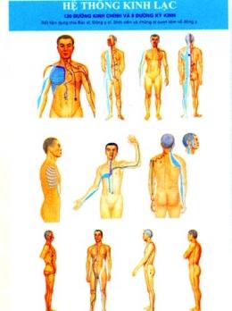 Tranh Châm Cứu Giải Phẫu Thực Dụng