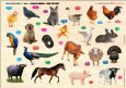 Cùng Con Chơi Và Học: Domestic Animals - Động Vật Nuôi