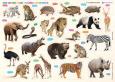 Cùng Con Chơi Và Học: Wild Animals - Động Vật Hoang Dã